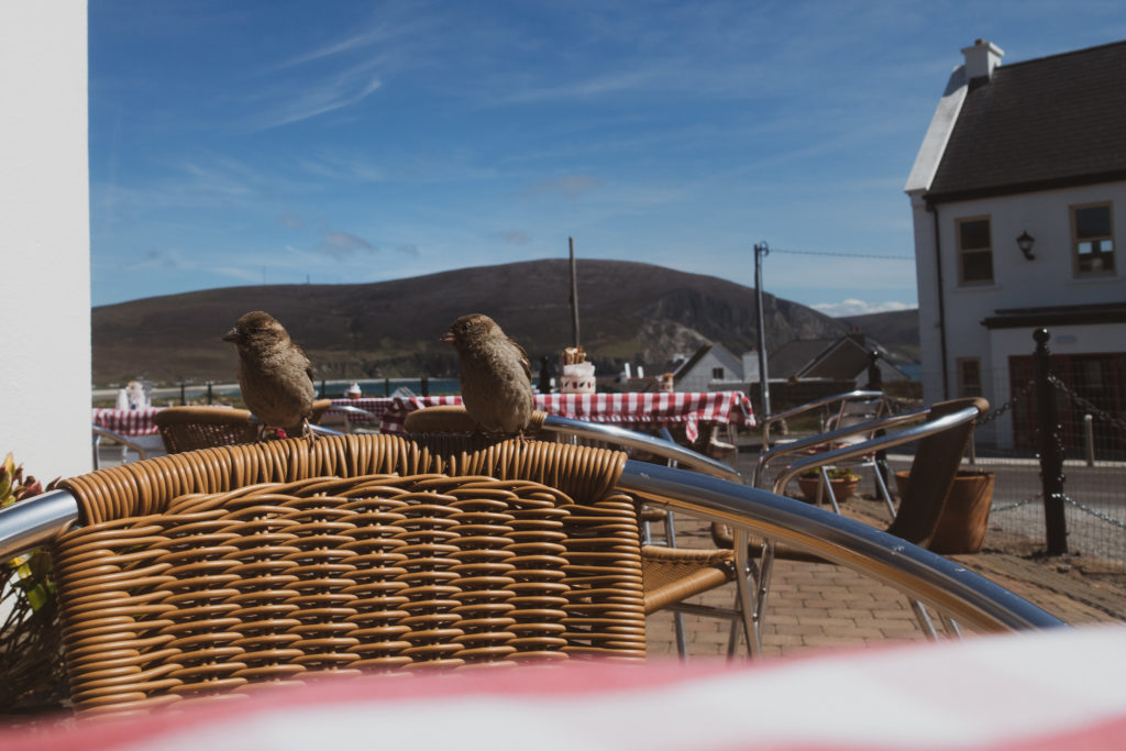 birds on achill island