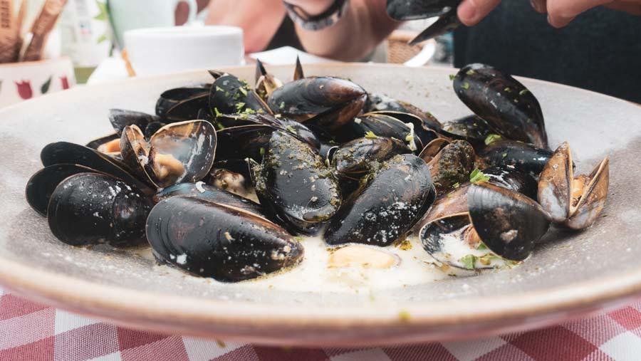 fresh irish mussels
